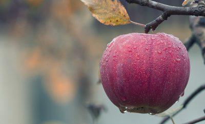 Enjoy an apple in The Big Apple